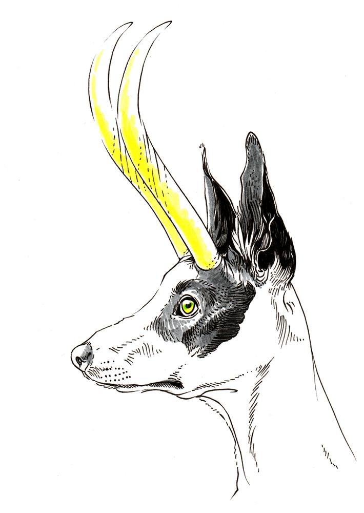 Antlers + Female Dog
